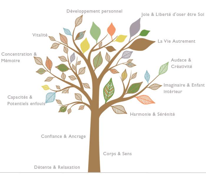 arbre sophro